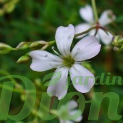 Détail de la fleur