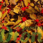 Fruits & feuillage en automne