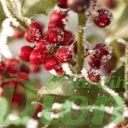 Fruits persistants sous la neige