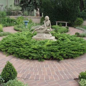 juniperus-sabina-calgary-carpet-genevrier-calgary-carpet.jpg