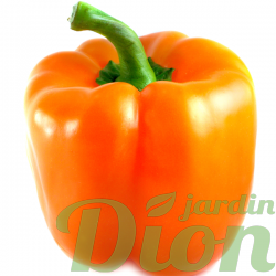 poivron-orange.png