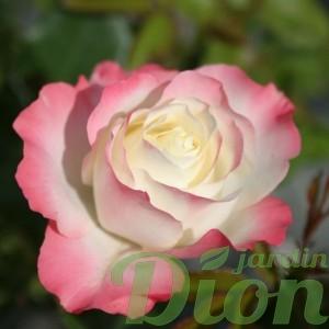 rosa-delany-sister-rosier-delany-sister.jpg