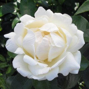 rosa-home-and-family-rosier-home-and-family.jpg
