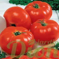 tomate-big-beef.jpg