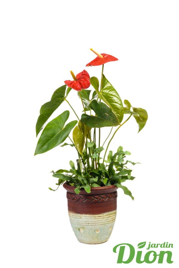 Arrangement de plantes Amérique du Sud | Jardin Dion