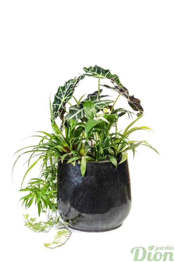 AP-0592-Plantes-naturelles.JPG