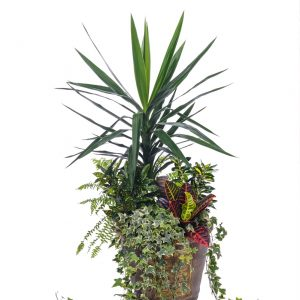 AP-0598-assortiment-de-plantes-naturelles.JPG