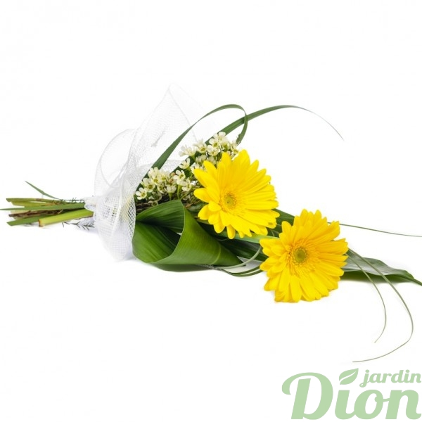 FB-0960-Double-Gerbera.JPG