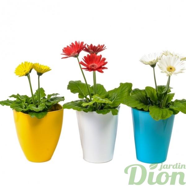 PL-0963-trio de gerbera-pots decoratifs.JPG