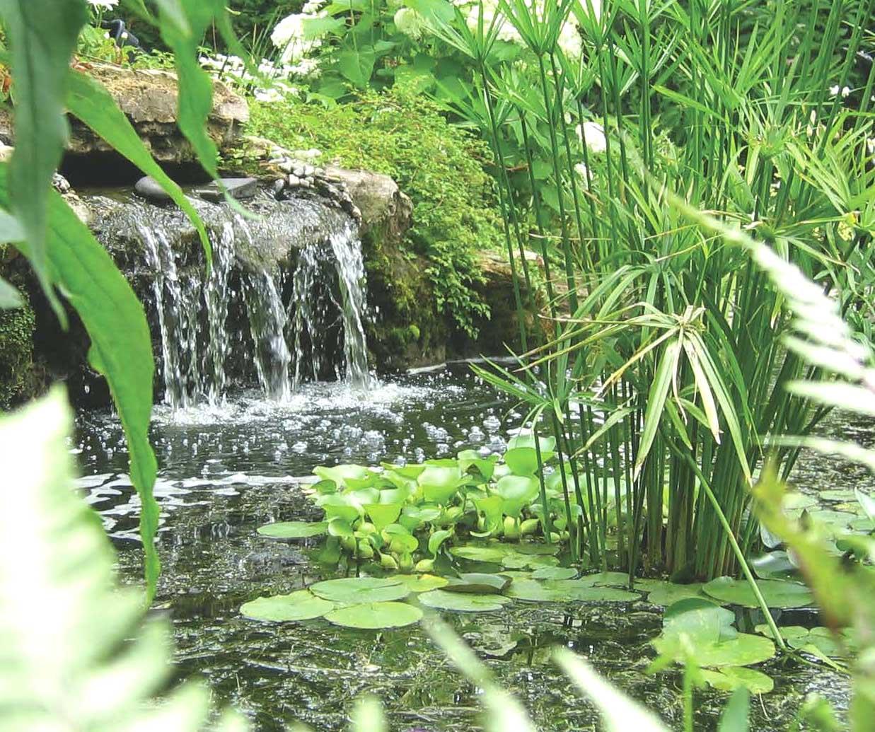 Diff rents types de jardins aquatiques jardin dion for Toile etanche pour bassin
