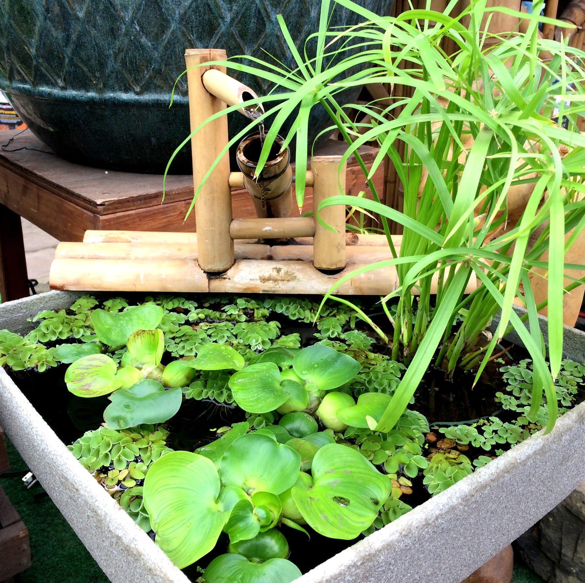 Un petit jardin d\'eau à la portée de tous! | Jardin Dion