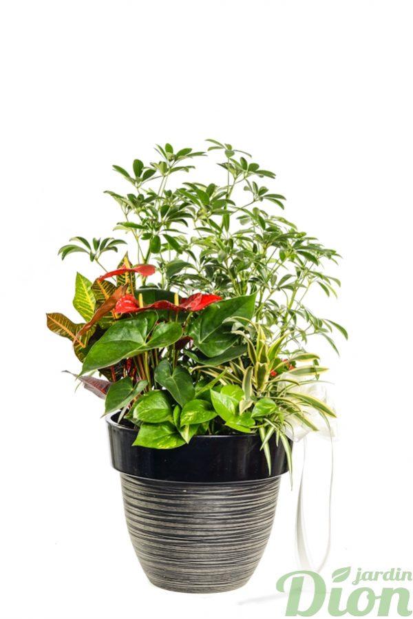 AP-0552-exotisme-arrangment-avec shefflera-anthurium-dans un pot