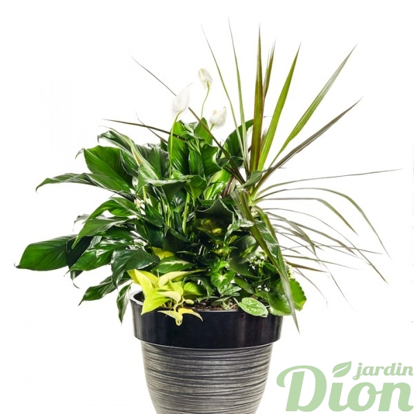 AP-0553-petit coin de foret tropical-arrangement-contemporain-dracaena-spathiphyllum-avec pot