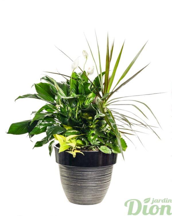 AP-0553-petit coin de foret tropical-arrangement-contemporain-dracaena-spathiphyllum-avec pot