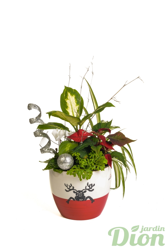 ap-0553-pot-plantes-noel-arrangment-renne-rouge et blanc-decore