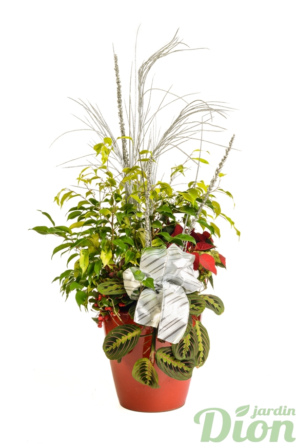 ap-0551-rrangement de fleur-jungle-poinsettia-arrangement-euphorbia-decore-noel-rouge-ruban-marantha-pot-plantes
