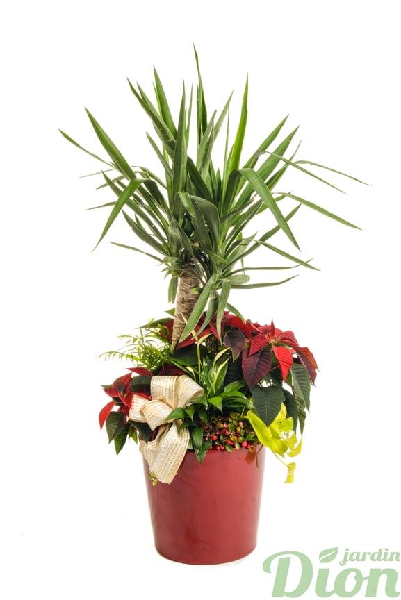 ap-0554-poinsettia-arrangement-euphorbia-decore-noel-rouge-ruban-yucca-tropical-pot-plantes
