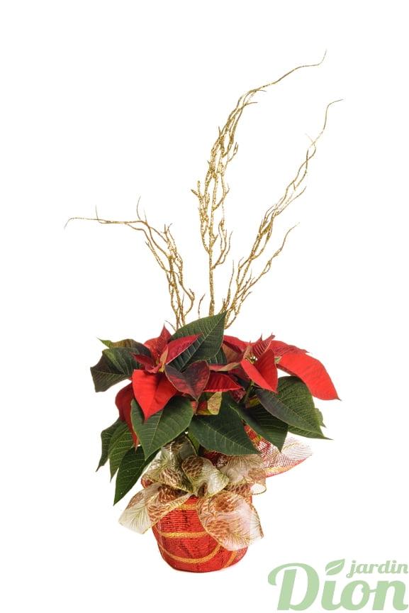 pl-0561-poinsettia-euphorbia-decore-noel-rouge-ruban
