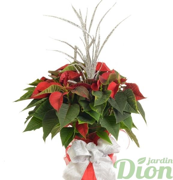 pl-0563-poinsettia-euphorbia-decore-noel-rouge-ruban