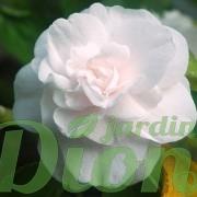 Fleurs double