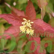 Fleurs et couleur des jeunes feuilles