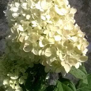 Fleur en fin de saison