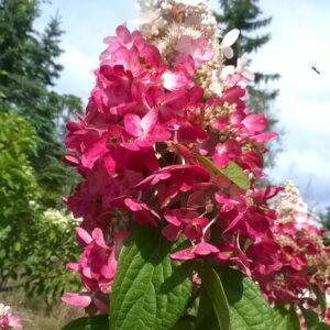 Floraison en fin d'été