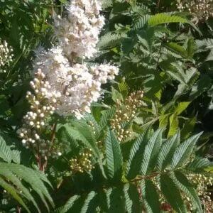 Détail des fleurs et des feuilles