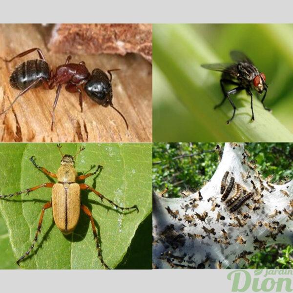 blattes de jardin affordable anti cafards et anti blattes pige with blattes de jardin cheap. Black Bedroom Furniture Sets. Home Design Ideas