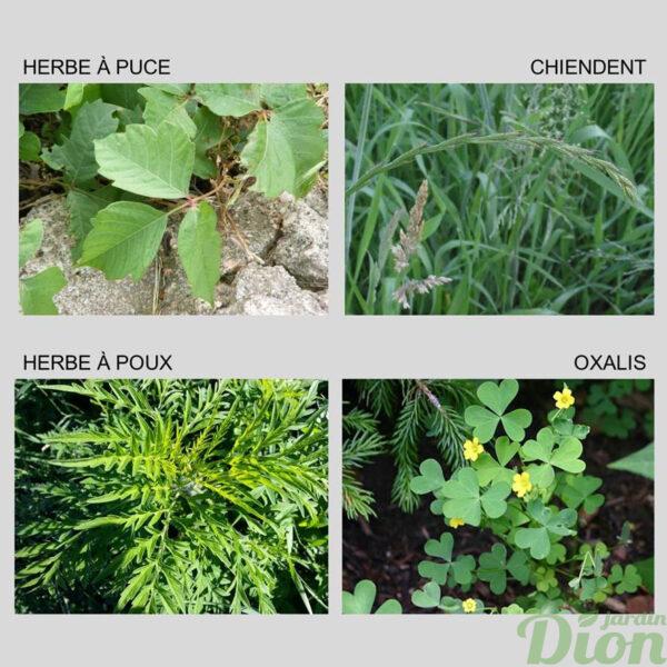 Mauvaises herbes communes