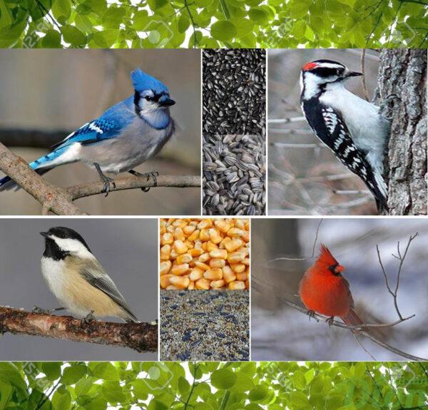 Oiseaux sauvages du Québec