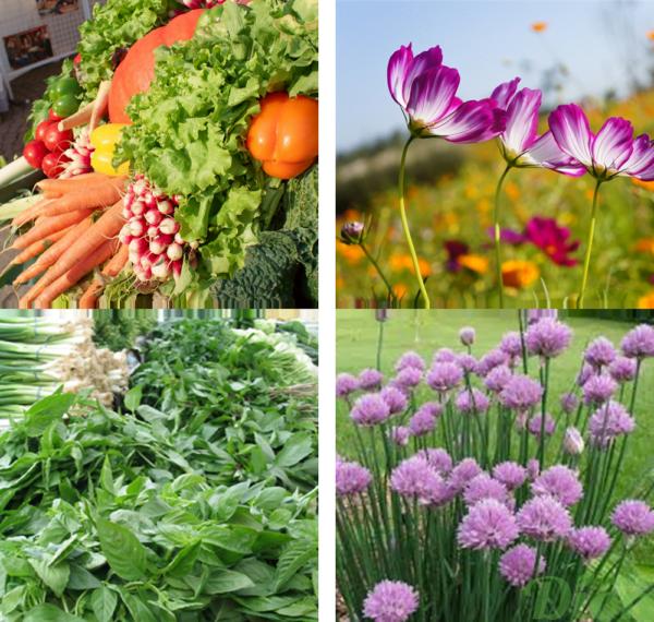 semences-légumes-potager-fines-herbes-fleurs-biologique-jardin.png