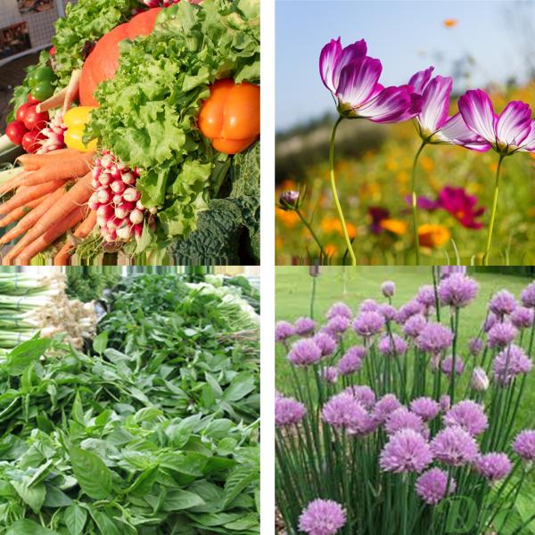 Semences pour fleurs fines herbes et potager jardin dion for Produit de jardinage