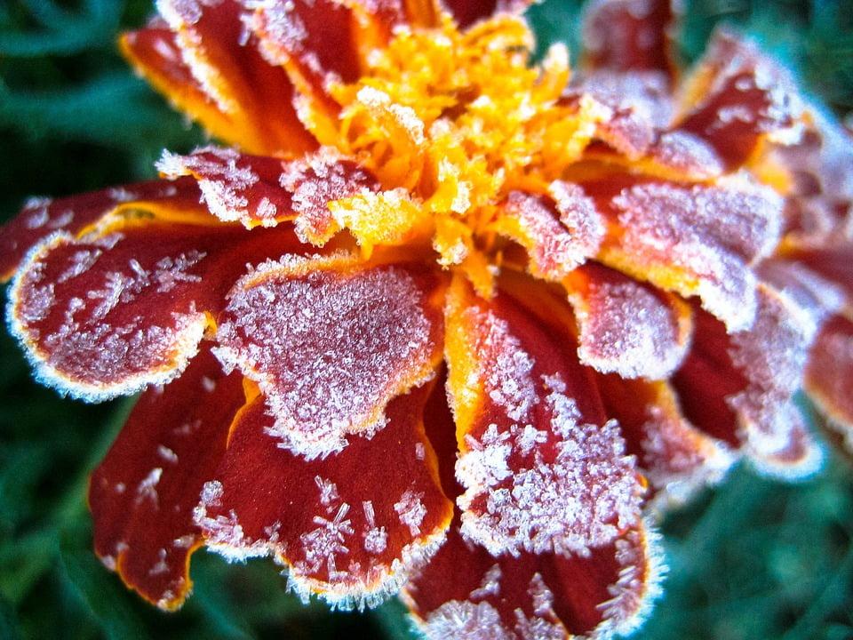Temp ratures froides ou risque de gel au sol comment for Les plantes et le gel