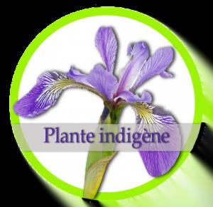 Logo Jardin Dion/ plantes indigènes