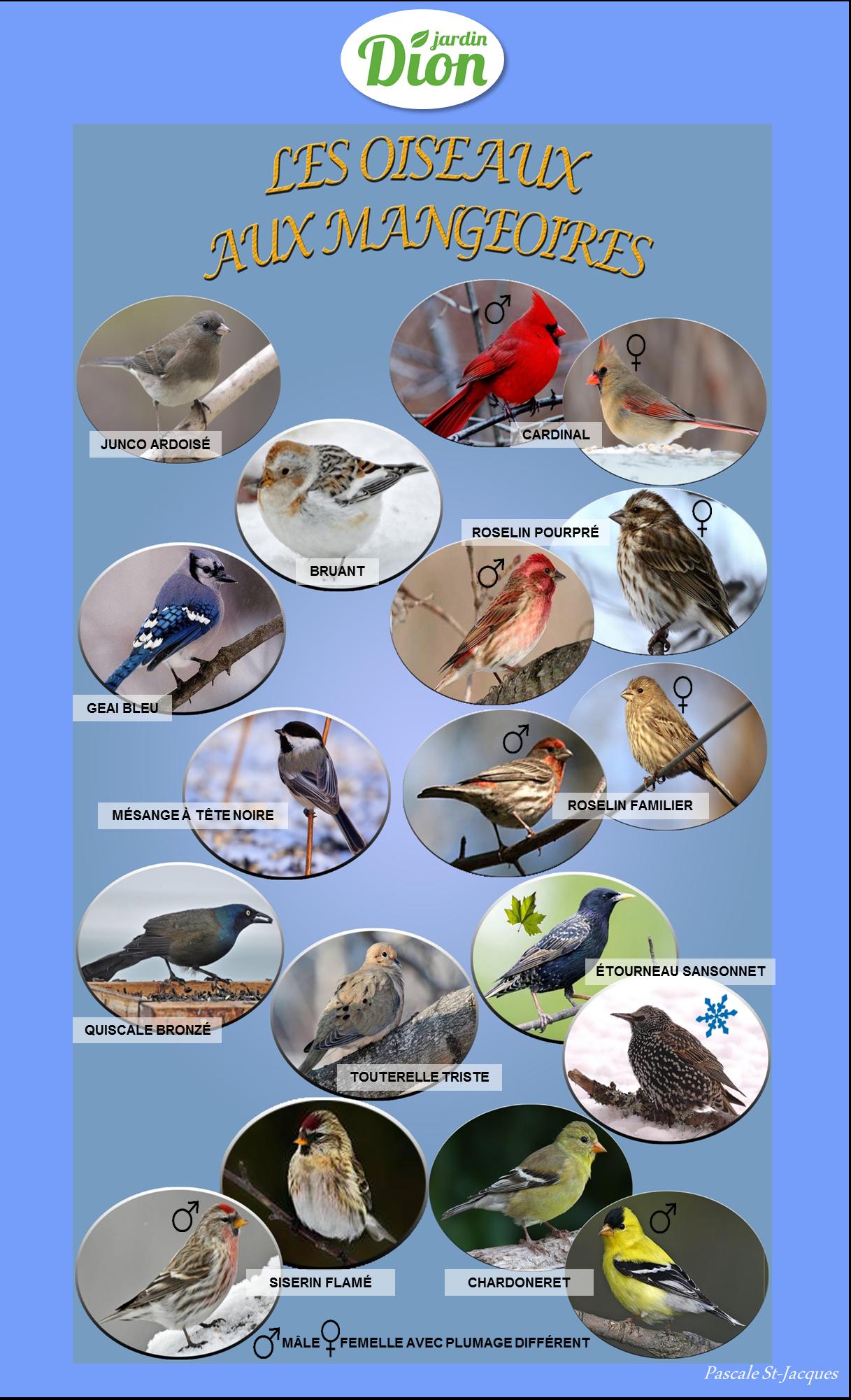 Les oiseaux sauvages du Québec - Jardin Dion