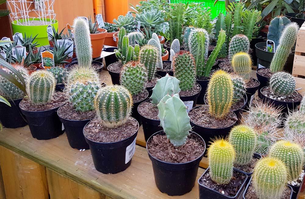 Cactus tous jardin dion - Voir tous les cactus ...