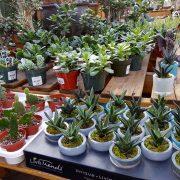 plantes.grasses-succulentes