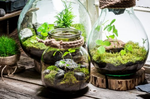 Terrariums tropicaux