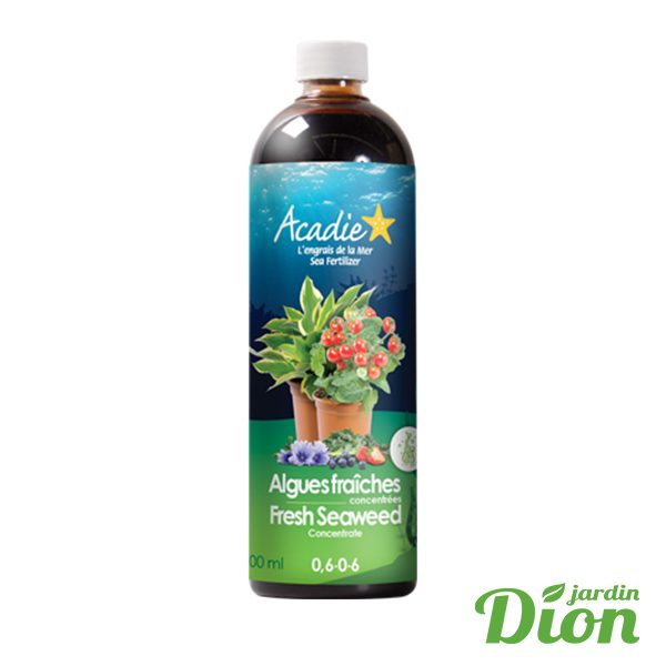 Algue fraiches Acadie (2588423D)