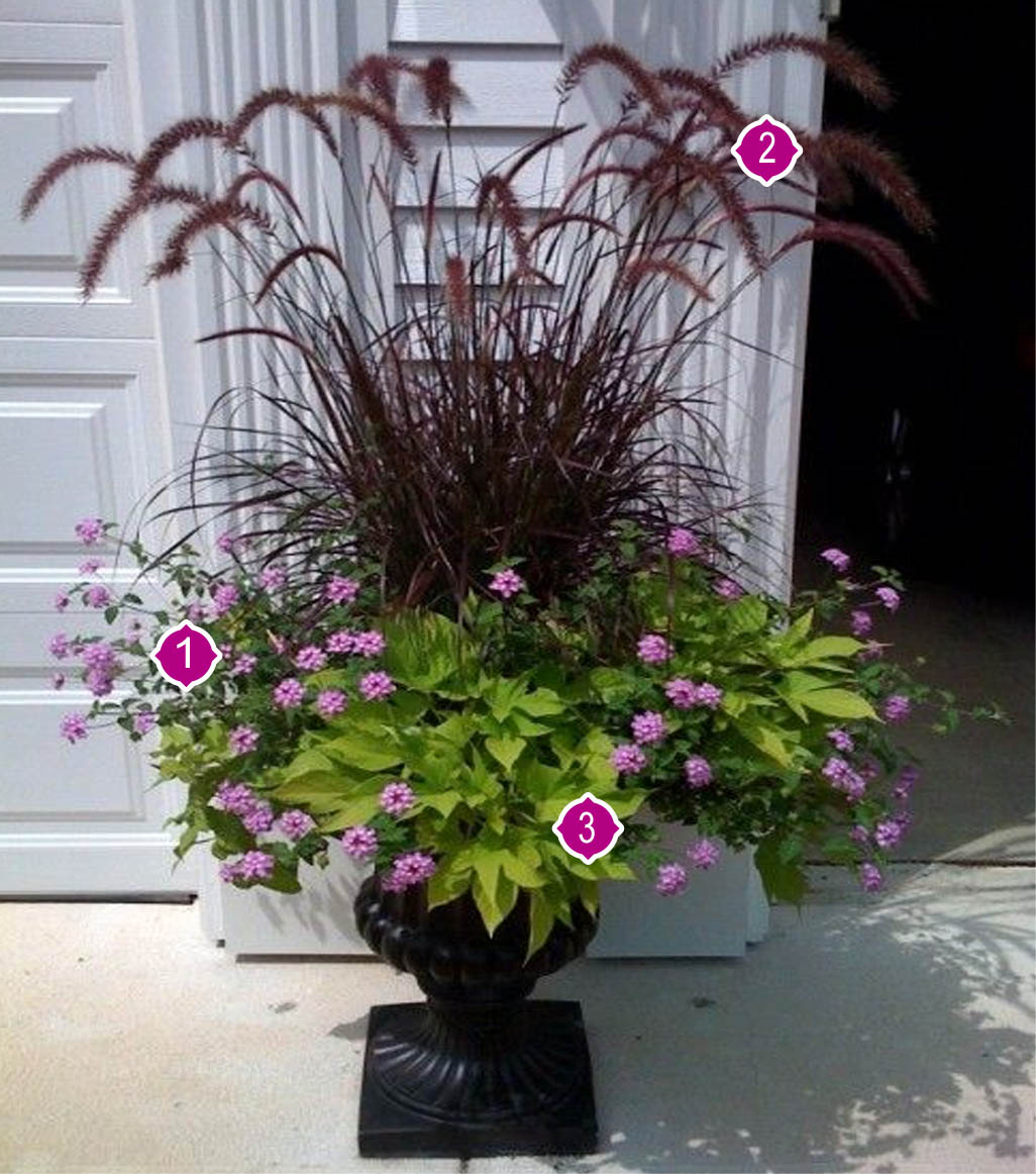 Fleurs Pour Mi Ombre arrangement champêtre d'annuelles soleil/ mi-ombre   jardin dion