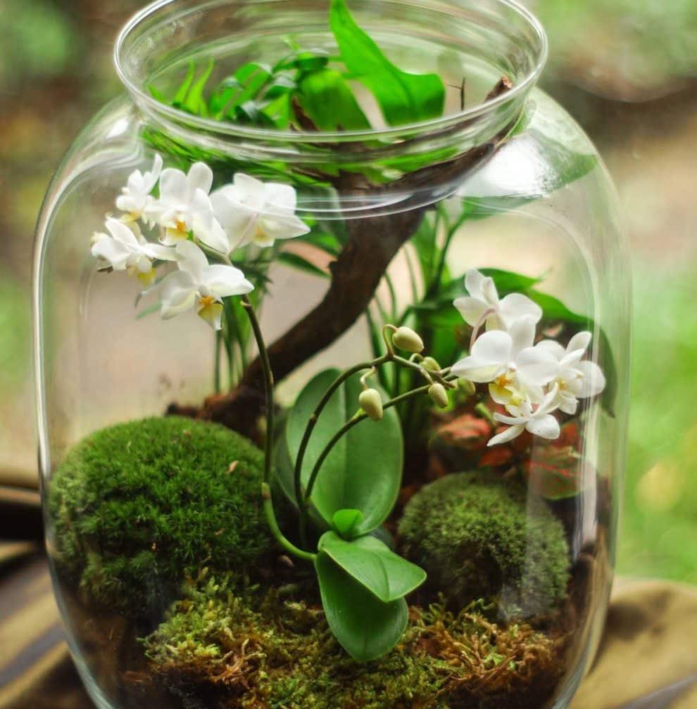 Terrarium Fermé Plante Grasse réalisation et entretien d'un terrarium | jardin dion