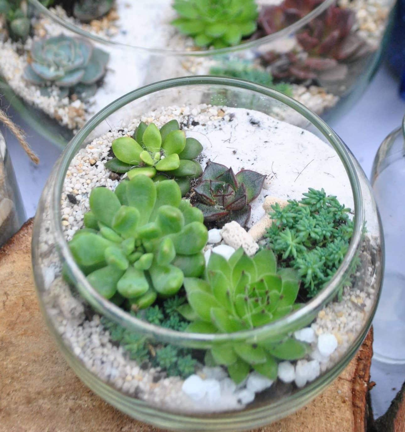 Comment Faire Un Terrarium Plante Grasse réalisation et entretien d'un terrarium | jardin dion