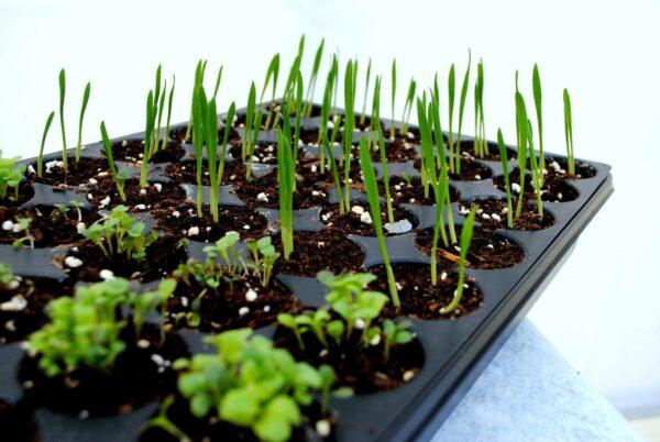 atelier-semer-vos-fines-herbes-et-legumes-du-potager-dans-un-plateau-pour-semis2