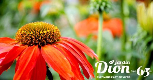 Centre de jardinage, pépinière et aménagement paysager | Jardin Dion