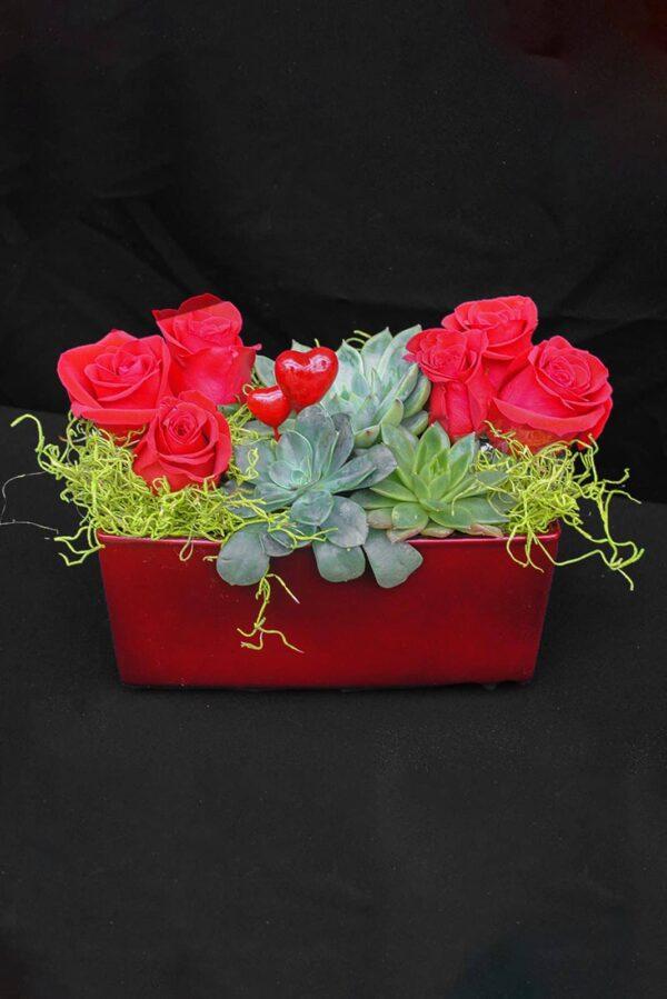 Succulents et roses rouge -84.99