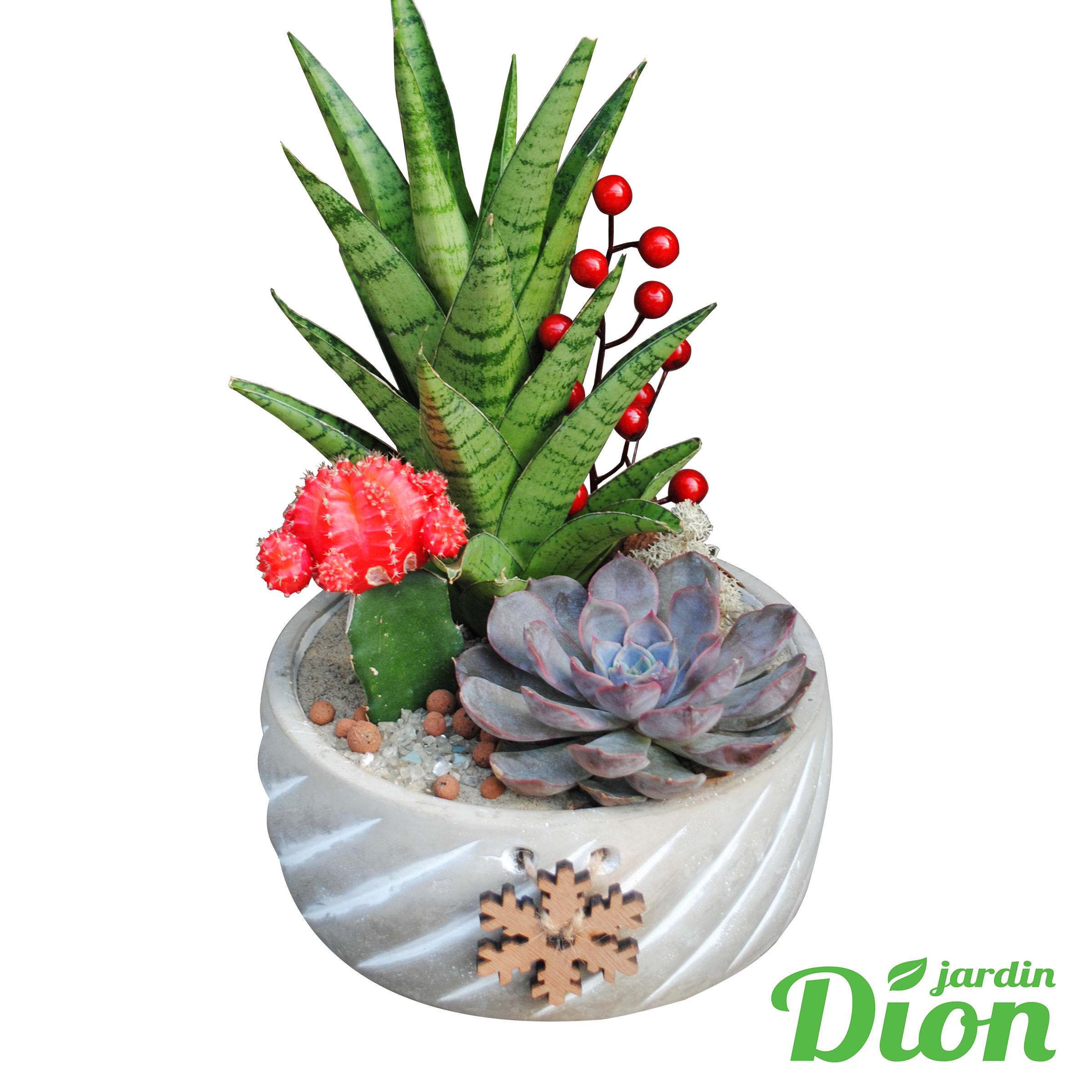 Plante de noel – cactus